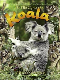 The Life Cycle of a Koala