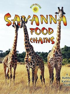 Savanna Food Chains