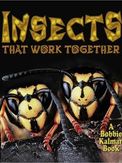 Insects that work together