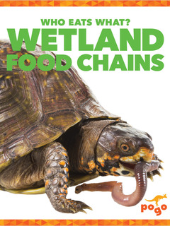 Wetlands Food Chains