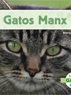 Gatos Manx
