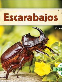 Excarabajos