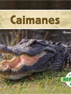 Caimanes