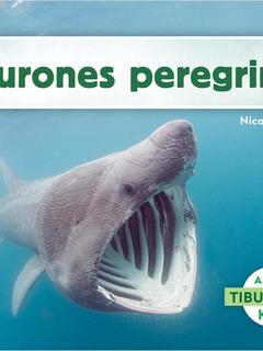 Tiburones peregrinos