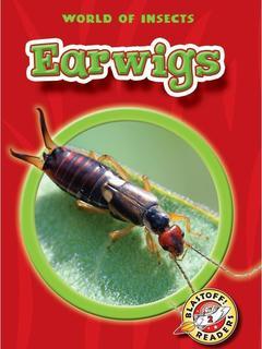 Earwigs