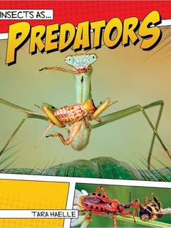 Insects as Predators