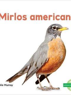 Mirlos americanos