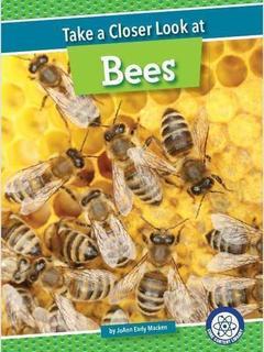 Take a Closer Look at Bees