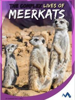 The Complex Lives of Meerkats