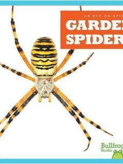 Garden Spiders