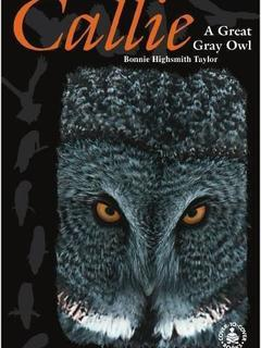 Callie: A Great Gray Owl