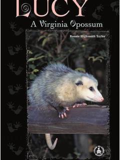 Lucy: A Virginia Opossum