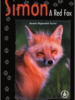 Simon: A Red Fox