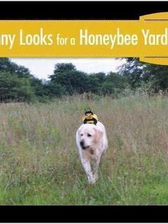 Danny Looks for a Honeybee Yard