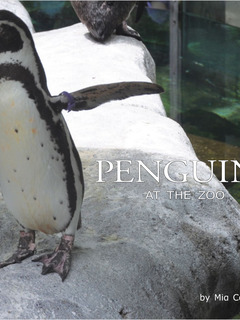 Penguins at the Zoo