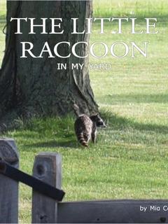 The Little Raccoon in My Yard