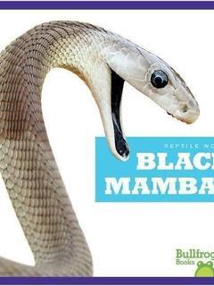 Black Mambas