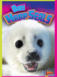 Baby Harp Seals