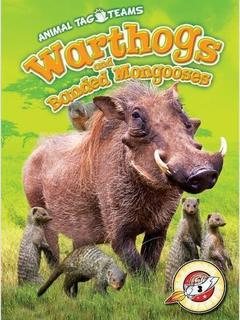 Warthogs and Banded Mongooses
