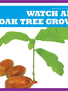 Watch an Oak Tree Grow