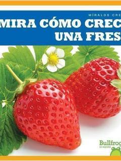 Mira cómo crece una fresa
