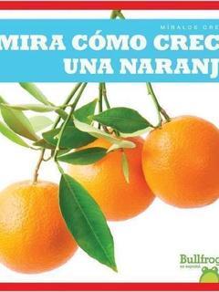Mira cómo crece una naranja