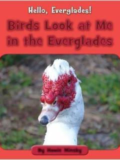 Birds Look at Me in the Everglades