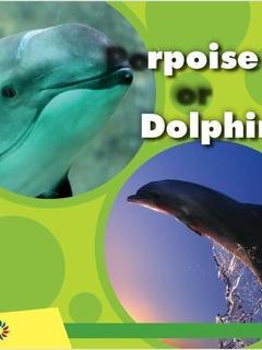 Porpoise or Dolphin
