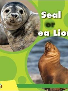 Seal or Sea Lion
