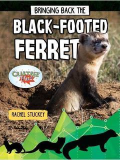 Bringing Back the Black-Footed Ferret