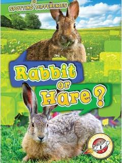 Rabbit or Hare?