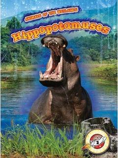 Hippopotamuses