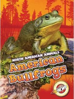 American Bullfrogs