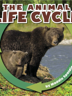 The Animal Life Cycle