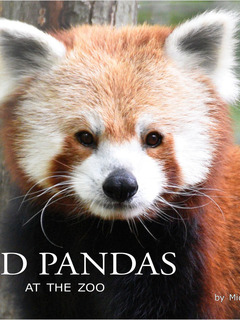 Red Pandas at the Zoo