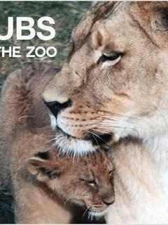 Cubs at the Zoo