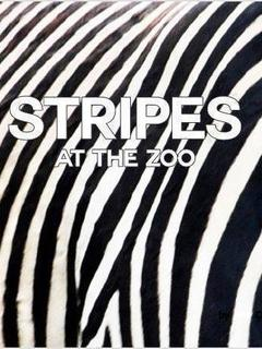 Stripes at the Zoo