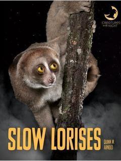 Slow Lorises