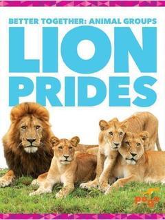 Lion Prides