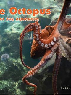 The Octopus at the Aquarium