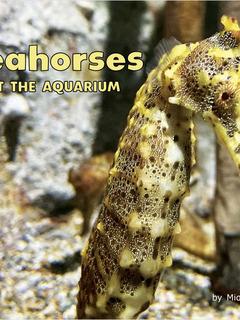 Seahorses at the Aquarium