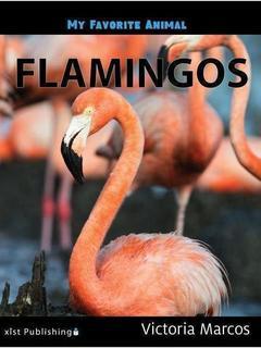My Favorite Animal: Flamingos