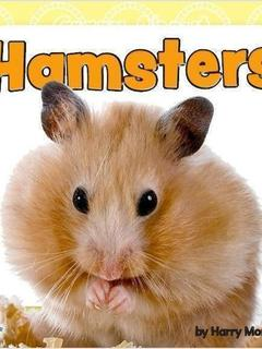 Crazy About Hamsters