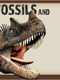 Fossils and Dinosurs