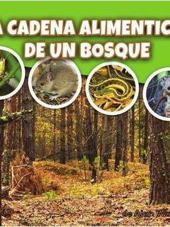 La cadena alimenticia de un bosque