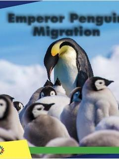 Emperor Penguin Migration