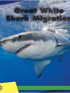 Great White Shark Migration
