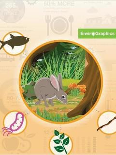 Invasive Species in Infographics