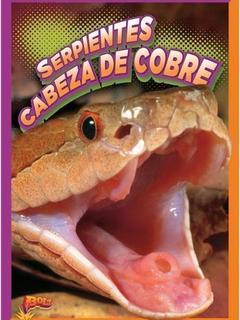 Serpientes cabeza de cobre