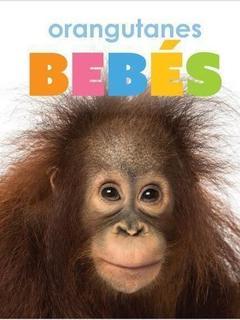 Orangutanes bebés